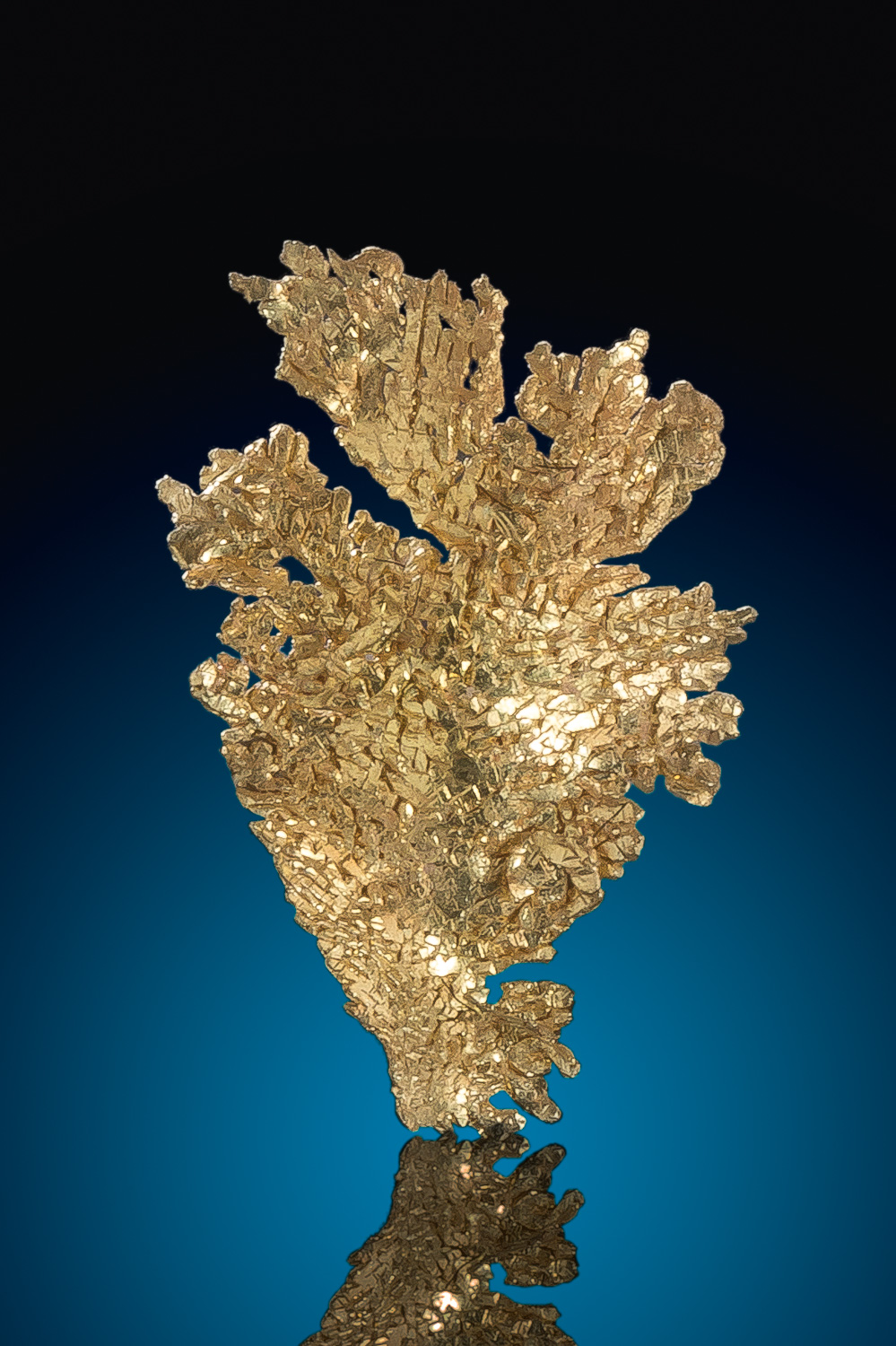 Magnificent Dendritic Leaf Gold Crystal - Round Mountain