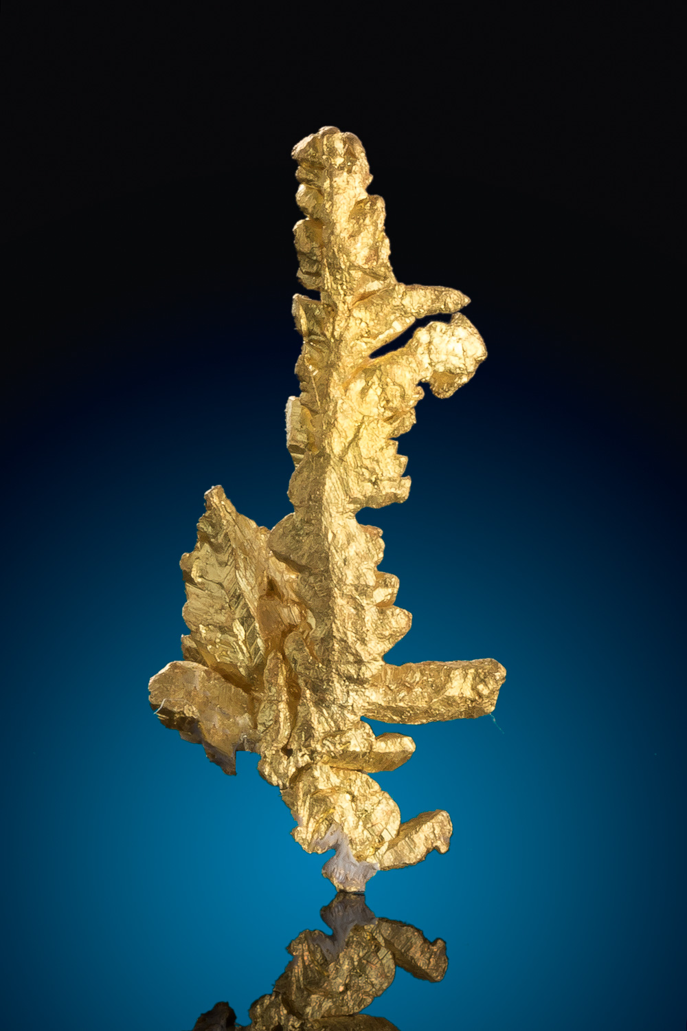 Fantastic Long Dendritic Gold Crystal - Mariposa, California