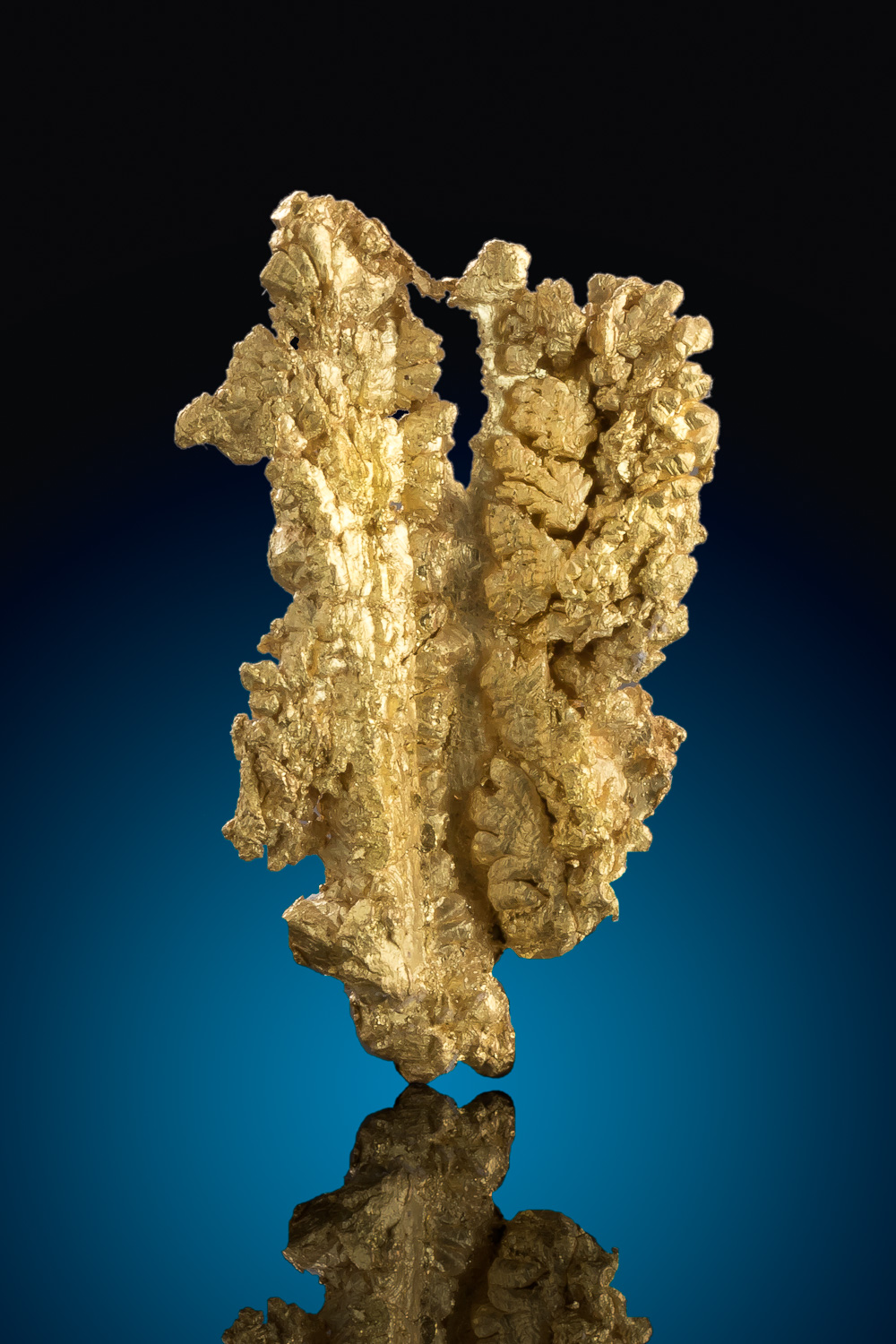 Brilliant Dendritic Form - Gold Crystal from Mariposa County