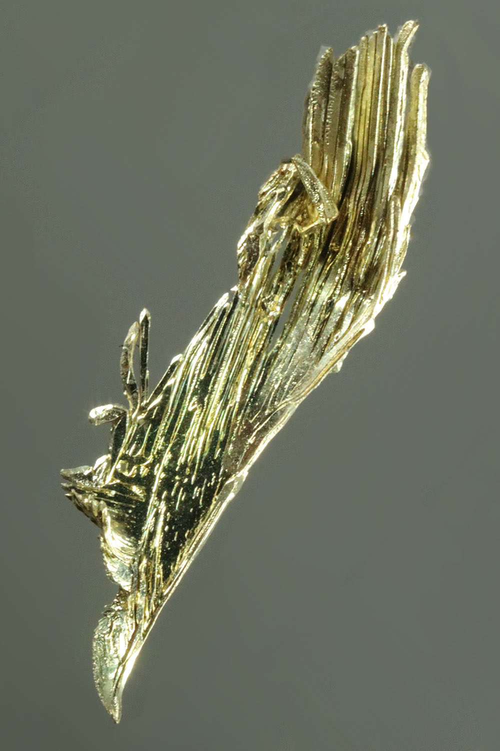 A Feather - Natural Gold Specimen from Fire Creek Mine