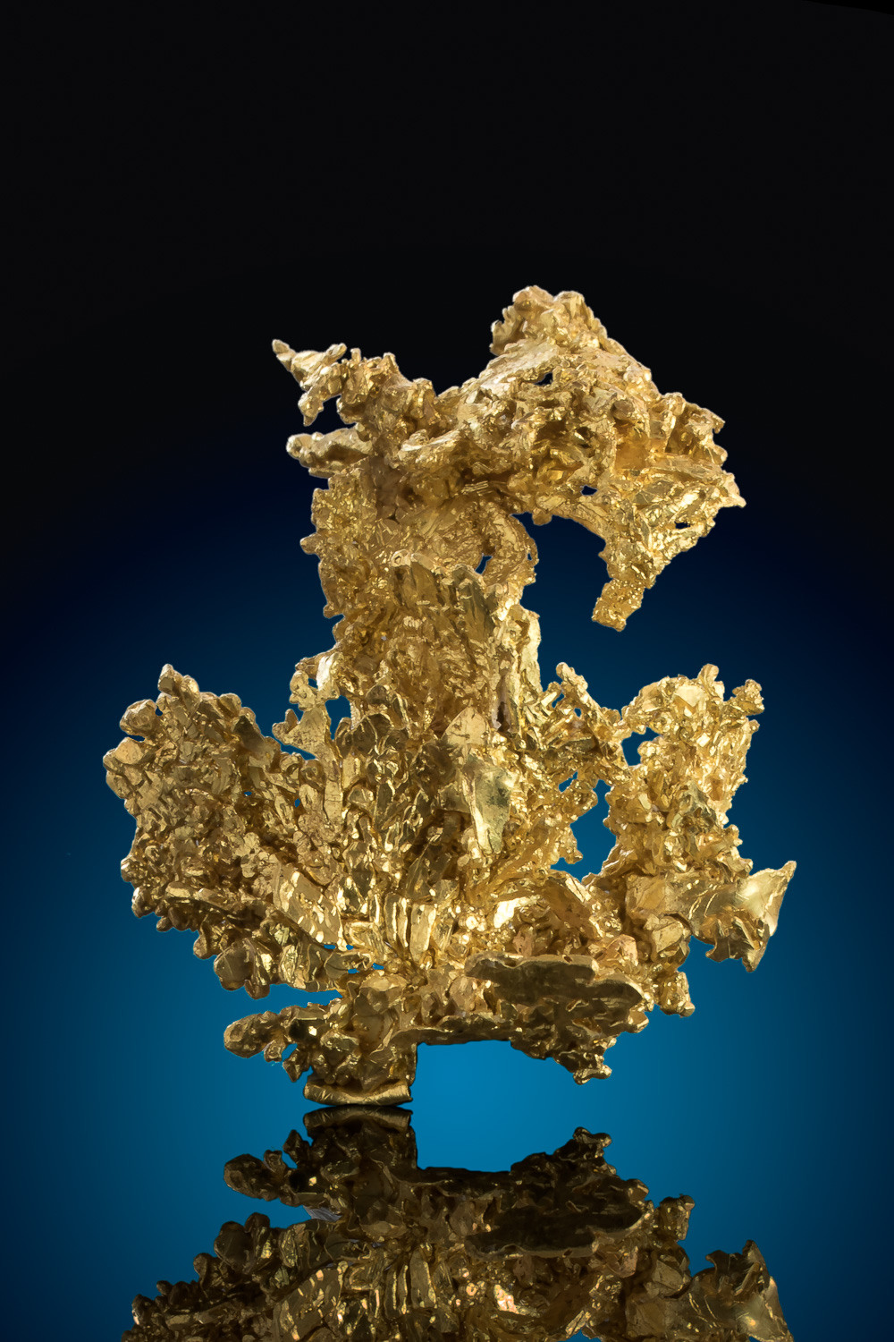"""The Dragon"" Magnificent Gold Specimen from the Eagles Nest Mine"