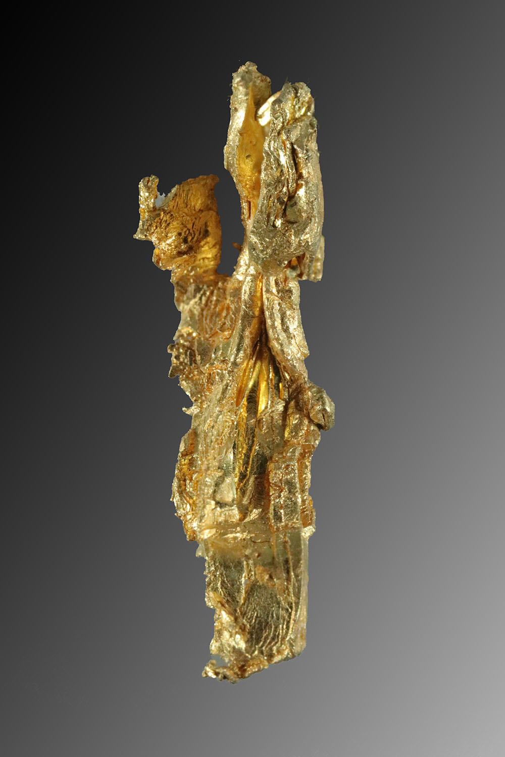Natural Long and Curved Gold Specimen from Round Mountain