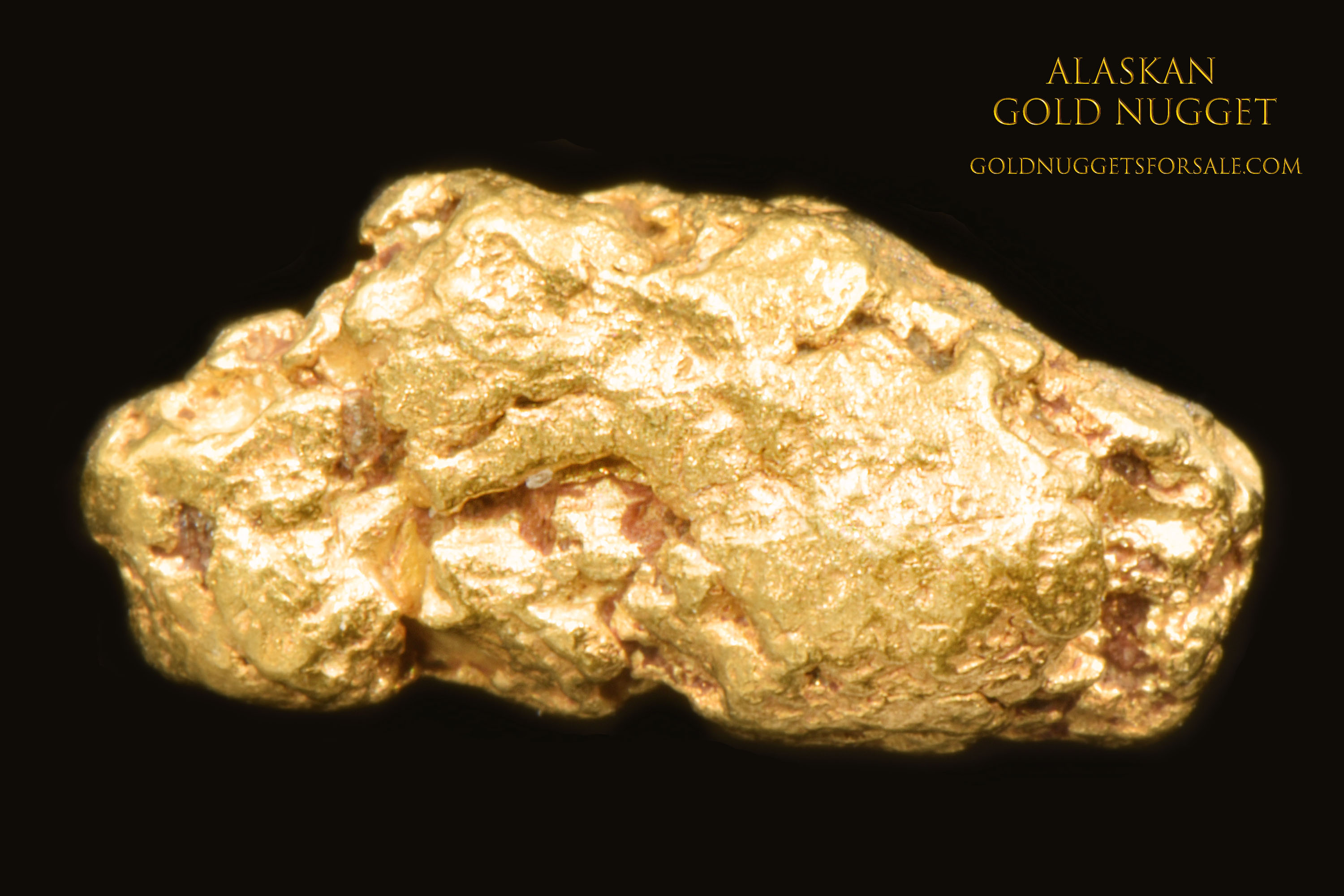 Proud Little Alaskan gold Nugget