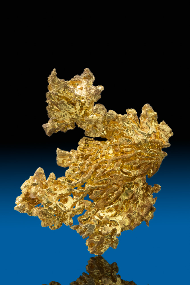 Brilliant Eagles Nest Dendritic Gold Crystal Specimen