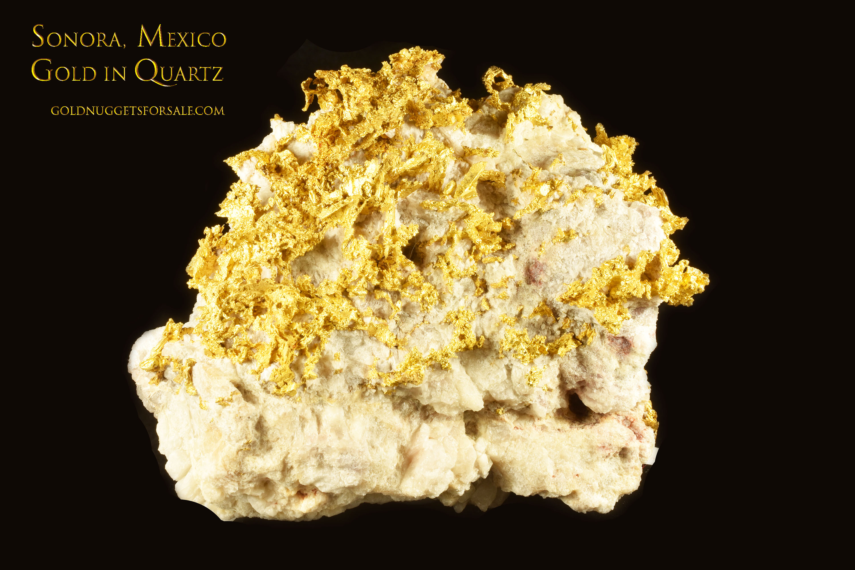 Rare and Marvelous 29.61 OZ Gold in Quartz Specimen from Mexico