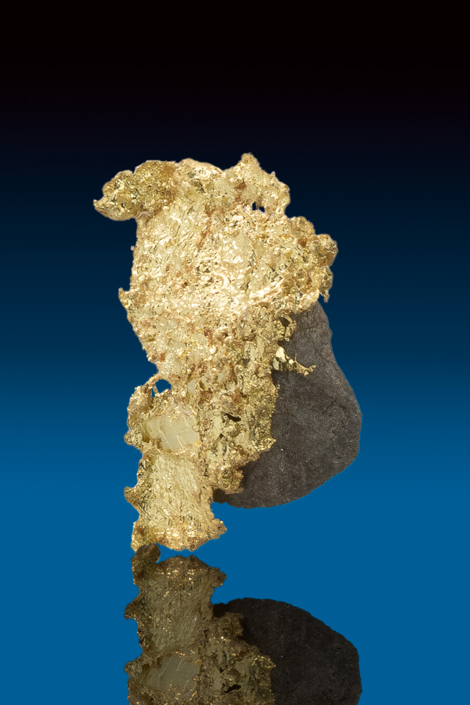 Brilliant Crystallized Gold Specimen with Arsenopyrite - CA