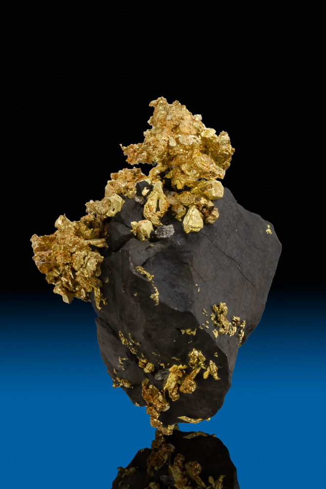 Stunning Contrast - Black and Gold - Arsenopyrite and Gold